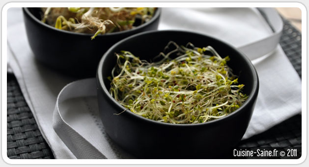 Blog cuisine bio : les graines germées