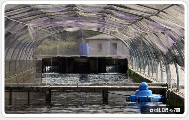 cipa aquaculture pisciculture