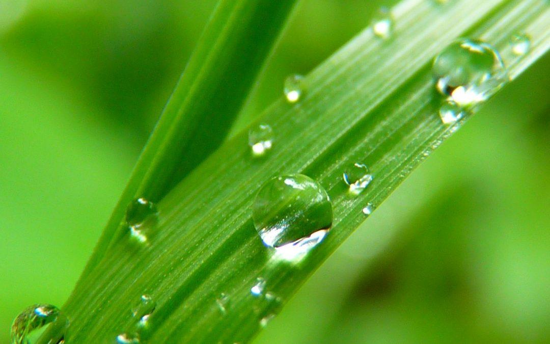 La filtration de l'eau : quelle eau boire?